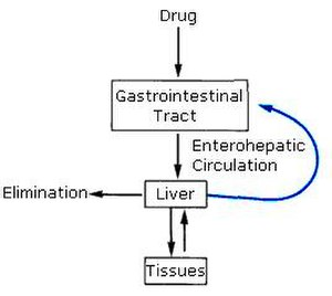 Enterohepatic circulation -  Enterohepatic circulation of drugs.