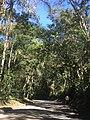 Estrada no Parque Nacional de Itatiaia.jpg