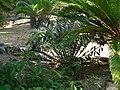 Fale - Giardini Botanici Hanbury in Ventimiglia - 674.jpg