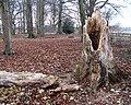 Fallen Tree - geograph.org.uk - 1137906.jpg