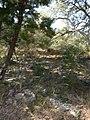 Far West Side, San Antonio, TX, USA - panoramio (5).jpg