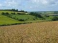 Farmland, South Newton - geograph.org.uk - 490597.jpg