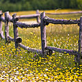 Field + Fence (2683476271).jpg
