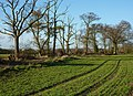 Field and line of trees - geograph.org.uk - 1608609.jpg