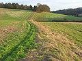 Field margins, Ashampstead - geograph.org.uk - 678143.jpg