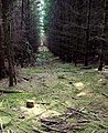 Firebreak, Puddletown Forest - geograph.org.uk - 786595.jpg