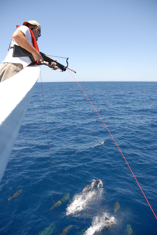 Fish0293 - Flickr - NOAA Photo Library