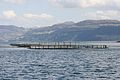 Fish farming off the coast of Skye.jpg