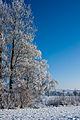 Flickr - Laenulfean - november winter (2).jpg