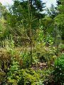Flickr - brewbooks - John M's Garden (19).jpg