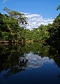 Flickr - ggallice - Reflections, Yasuni.jpg