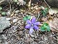 Flor de montaña.jpg