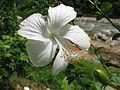 Flower-IMG 2651.JPG