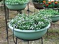 Flower-center133737.jpg