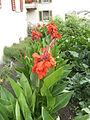 Flower.2395.JPG