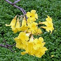 Flower I IMG 3970