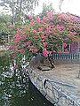 Flower tree Scenery.jpg
