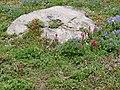 Flowers (0535d3420e7e421cb896de8ffd210eda).JPG