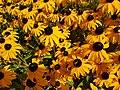 Flowers (42166009810).jpg