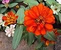 Flowers - Uncategorised Garden plants 98.JPG