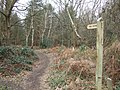 Footpath at Pyrford Common - geograph.org.uk - 142443.jpg