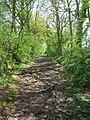 Footpath near Champions Farm - geograph.org.uk - 779366.jpg