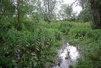 Stevington Marsh - Image: Footpath to River Great Ouse geograph.org.uk 469422