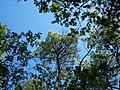 Forêt de la Coubre 017.jpg
