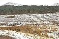 Forestry in Glen Nevis - geograph.org.uk - 1779962.jpg