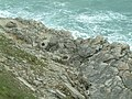 Fossil Forest near Lulworth Cove - geograph.org.uk - 414771.jpg