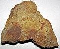 Fossiliferous sandstone (Vinton Member, Logan Formation, Lower Mississippian; Toboso East railroad cut, Licking County, Ohio, USA) 3 (31475383481).jpg