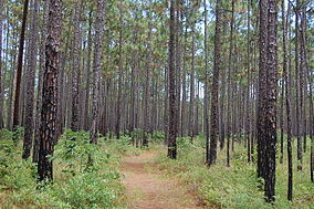 Francis Marion NF1.jpg