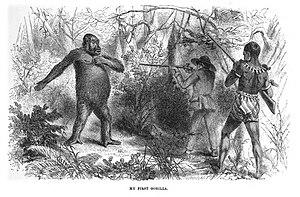 Paul Du Chaillu - Drawing of Du Chaillu at close quarters with a gorilla