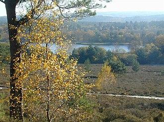 Frensham Common - Hillsides of the common overlooking lower parts, including Frensham Little Pond