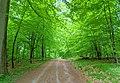 Fresh leaves on the trees (51260718419).jpg