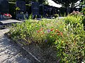 Friedhof Groß-Jedlersdorf Biodiversität sl5.jpg