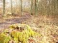 Frohnau - Waldweg bei der Rote Chaussee (Woodland Path by Rote Chaussee) - geo.hlipp.de - 32731.jpg