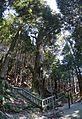 Fukuou shrine , 福王神社 - panoramio (36).jpg