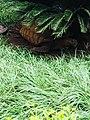 Funaab zoo park 04.jpg