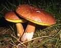 Fungi (2788521332).jpg