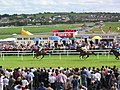 Galway races - panoramio.jpg