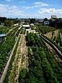 Garden - panoramio - Jun Maegawa.jpg