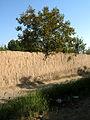 Garden Way - Wall - trees - streamlet - 17 Shahrivar st - Nishapur 01.JPG