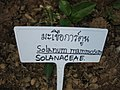 Gardenology.org-IMG 7334 qsbg11mar.jpg