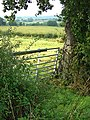 Gate and tree - geograph.org.uk - 955195.jpg