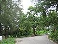 Gholvad, Dahanu - panoramio (1).jpg