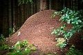Giant anthill (4905275342).jpg
