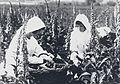 Girls harvesting foxgloves Wellcome L0041456.jpg