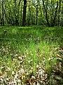 Glasweiner Wald (Schwarzwald) nächst dem Grünen Kreuz sl3.jpg