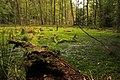 Gmina Piecki, Poland - panoramio (236).jpg